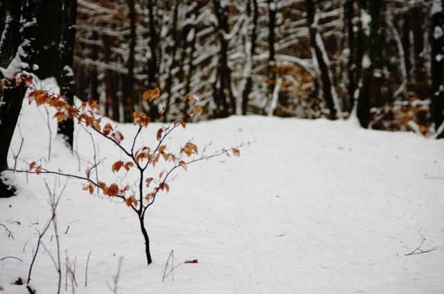 Jesienne drzewko, zimową porą.