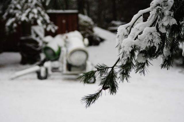 Sosna i armatki śnieżne