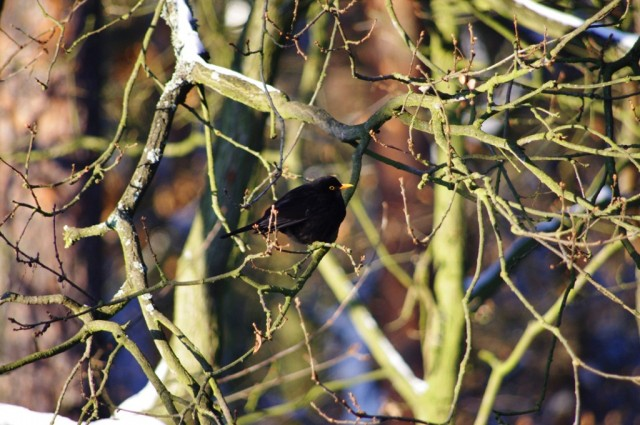 Ptaki w Zdunowie 9