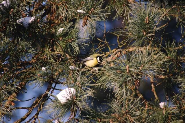 Ptaki w Zdunowie 3