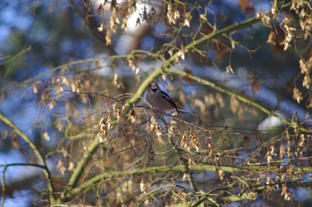 Ptaki w Zdunowie 5
