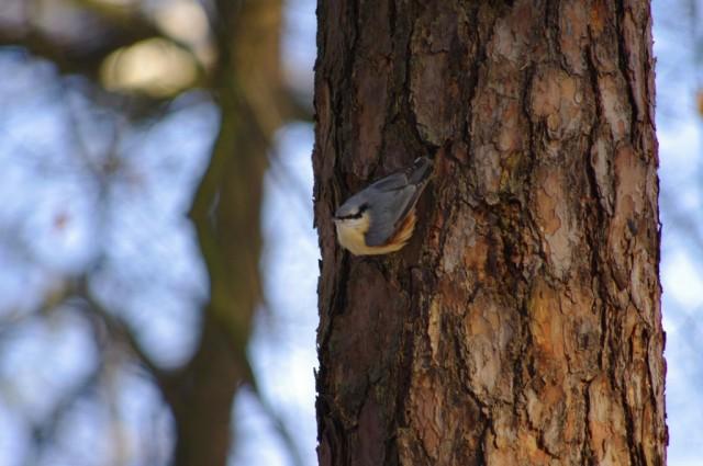 Ptaki w Zdunowie 8