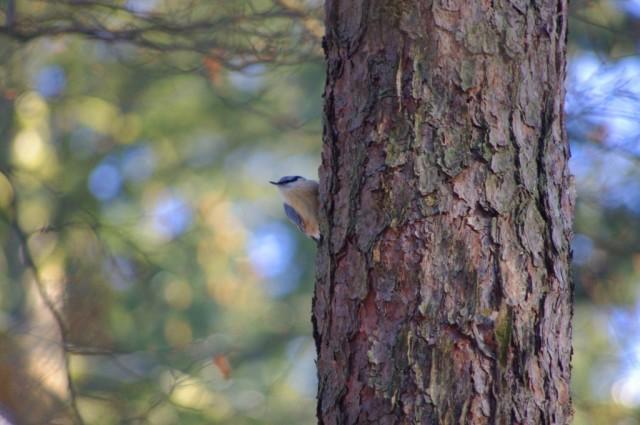 Ptaki w Zdunowie 7