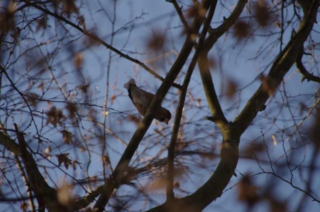 Ptaki w Zdunowie 4