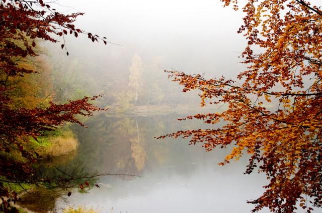 Puszcza Bukowa Jesień